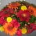 Салон флористики